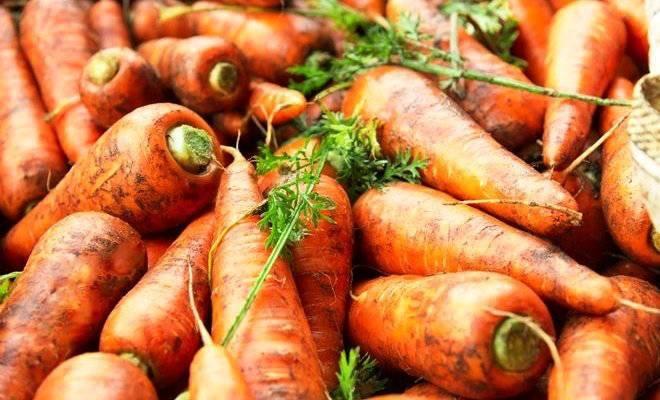меры защиты моркови